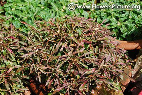 medicinal plants  flowers