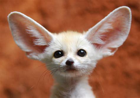 desktop wallpapers backgrounds cute funny animals