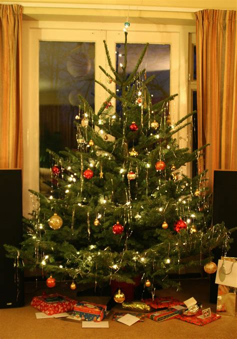 make a christmas tree last longer caring for a live
