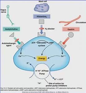 Proton Pump Inhibitor Mechanism Of Action Diagram