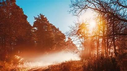 Forest Autumn Opening 5k Wallpapers Sunbeams Season