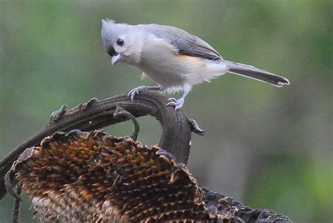 Terrell Daily Photo Backyard Bird