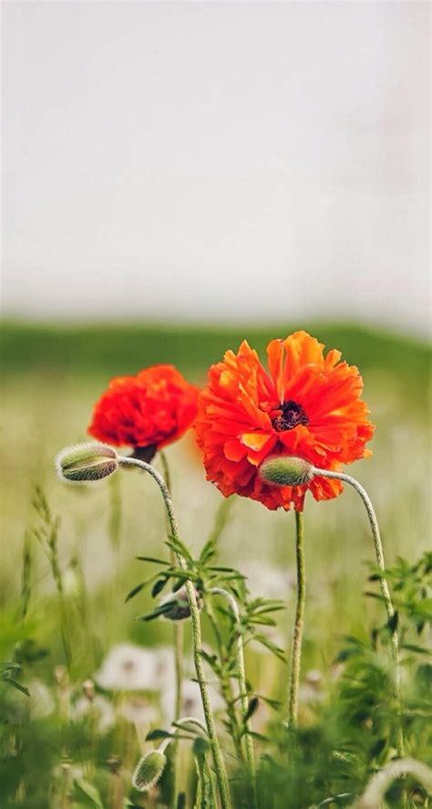 唯美花卉高清手机壁纸744*1392_手机壁纸下载_美桌网