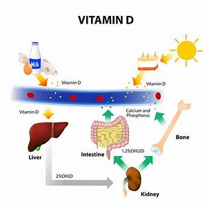 Vitamin D  U0026 Parathyroid Hormone Are Associated With Instability  U0026 Poor Balance In Middle To