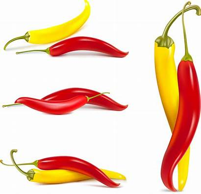 Vector Chili Peppers Fine Pepper Clipart Eps