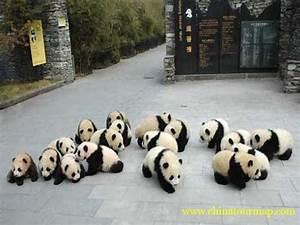 Giant Panda Photos,Panda Pictures, Panda Photos, Panda ...