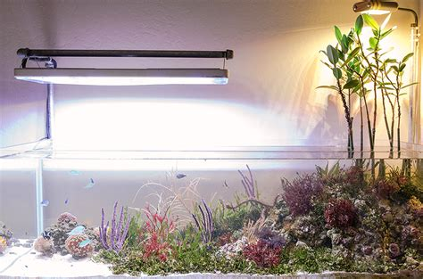 brad  featured aquariums nano reefcom community