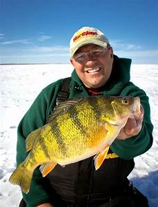 The best yellow perch fishery on Earth? - Outdoor Canada  Perch