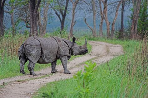 india wildlife tour with elephant and rhino safari