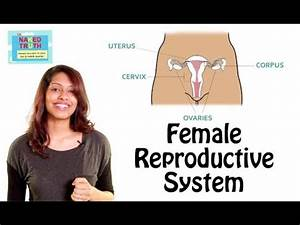 Female Reproductive System 101 In Hindi