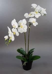 Schöne Orchideen Bilder : orchidee 75x40cm real touch wei cg k nstliche orchideen blumen kunstpflanzen kunstblumen ~ Orissabook.com Haus und Dekorationen
