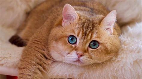 garfield cat