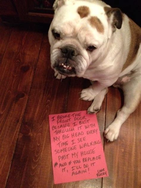 hall  shame duke  bulldogs