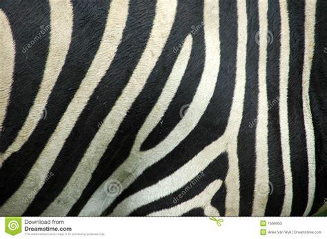 peau de zebre mundu fr
