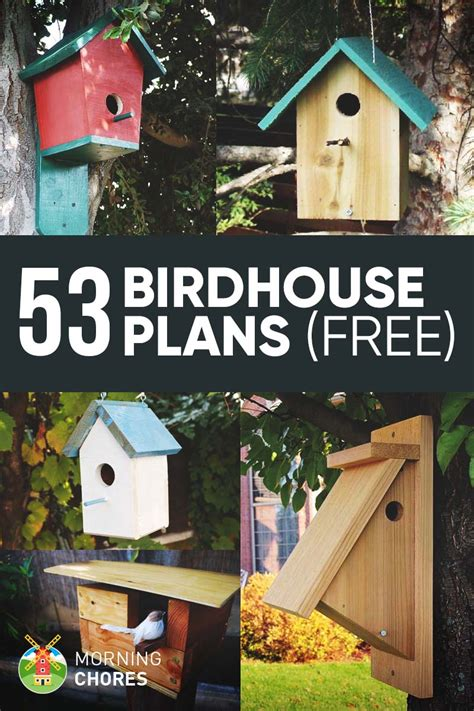 diy birdhouse plans   attract    garden