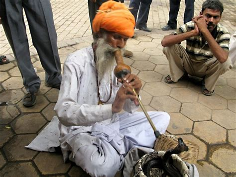 snake india charmer facts charmers cobra flute king charming sway illegal npr delhi did know losing dying amazing slappedham