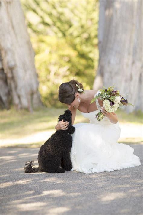 dogs  weddings     cute