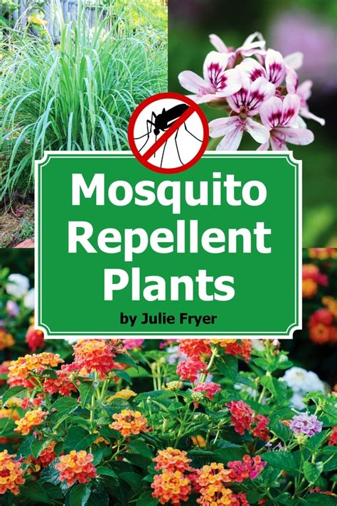 mosquito resistant plants organic gardening blog mother earth news growing organic food vegetable gardening organic