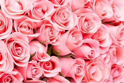 Rose Roses Bouquet Couleurs Flower Obituary Backgrounds