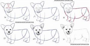How to Draw a Corgi Puppy Easy Step by Step Realistic ...