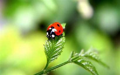 Beetle Wallpapers Insect Insects