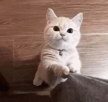 cat notice  gif cat noticeme discover share gifs