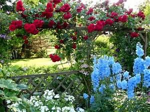 Was Passt Zu Rosen : hilfe was passt zu sympathie und schneewittchen mein ~ Lizthompson.info Haus und Dekorationen