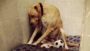 'Saddest dog in the world' receives more than 3,000 ...