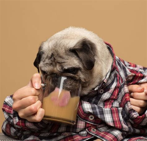 It feels tempting to let your dog experience the same energy outburst that we experience after sipping a cup of coffee. Woman Creates 'Rooffee,' A Coffee For Dogs   HuffPost