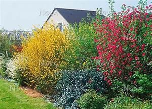 Blühende Hecke Schnellwachsend : bunte hecke anlegen pflanzen f r nassen boden ~ Eleganceandgraceweddings.com Haus und Dekorationen
