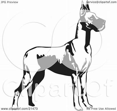 Dane Dog Ears Clipart Standing Cropped Background
