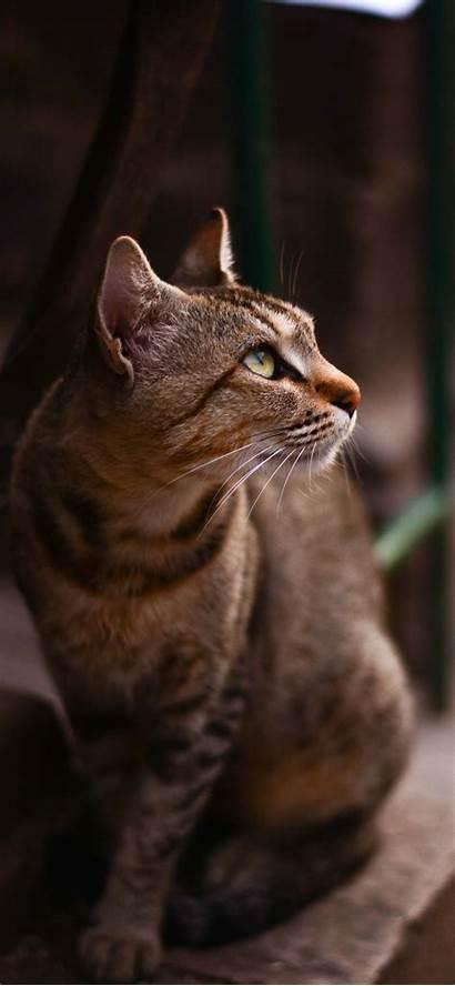 Iphone Cat Wallpapers Cats Kittens Tabby Lockscreen