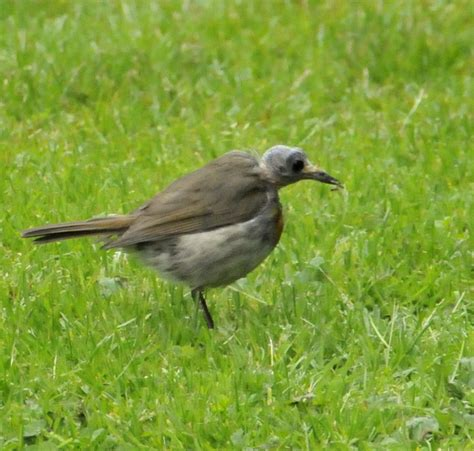 weird bird identify this wildlife the rspb community