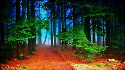 Nature Forest 2048 1152 Autumn Wallpapers Path