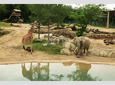 Dallas Zoo TX Hours, Address, Tickets & Tours