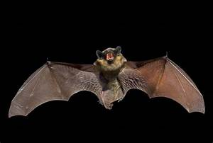 Rabid bat found in Palatine the 4th in Cook County this year