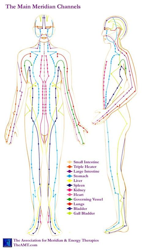 acupuncture meridian chart  amt showing main meridians tai chi traditional chinese