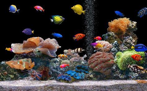 aquarium bulles d eau chirurgien bleu couleur vive poisson clown poissons nature
