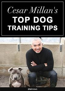 25 best ideas about training tips on pinterest dog With dog behavior training tips