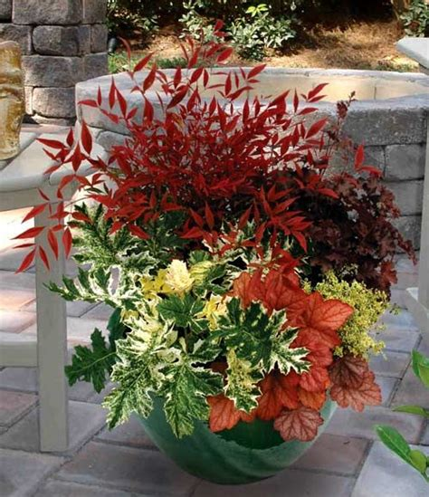 fall planting heuchera and acanthus tasmanian angel two of the plants in this container photo s courtesy