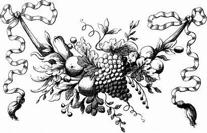Illustration Fruit Swag Floral Ribbon Graphics Shabby