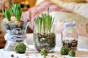 Blumenzwiebeln Im Glas : frische blumen bringen den fr hling ins haus und sorgen f r gute laune ~ Markanthonyermac.com Haus und Dekorationen