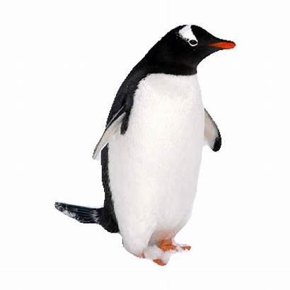 Penguin Transparent Gifs Imoji Sticker Giphy Everything