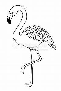 Flamingo Schwarz Weiß : flamingo schwarzwei isoliert vektorillustration vogel vektorgrafik thinkstock ~ Eleganceandgraceweddings.com Haus und Dekorationen