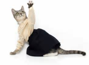 cat clothing cats wearing clothes pictures and