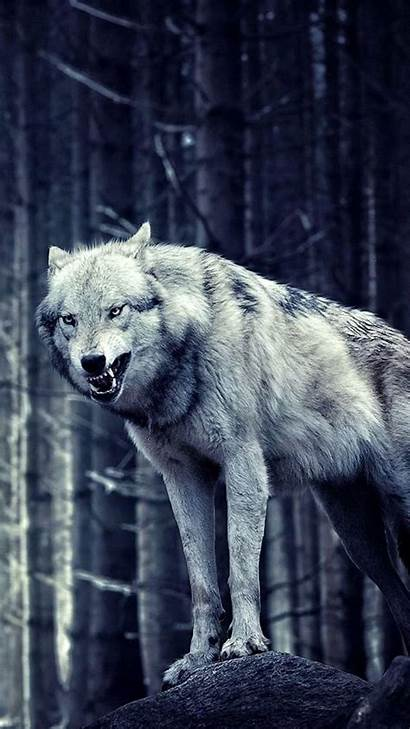 Wolf Iphone Wallpapers Lone Wolves Elegant