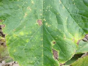 Ohio Veggie Disease News