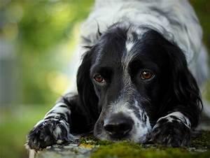 Чем обезболить боль в суставах у собак
