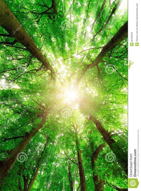 canopy sunburst stock image image  glow natural high