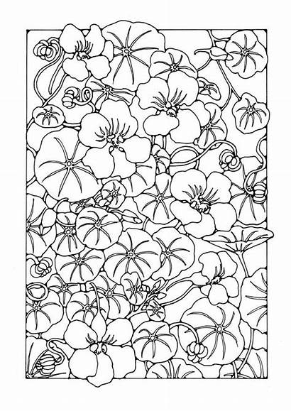 Coloring Garden Nasturtium Flower Kleurplaat Bloem Pages